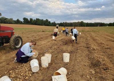 Volunteering at First Fruits Farm
