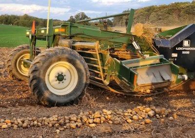 Picking Potatoesat First Fruits Farm
